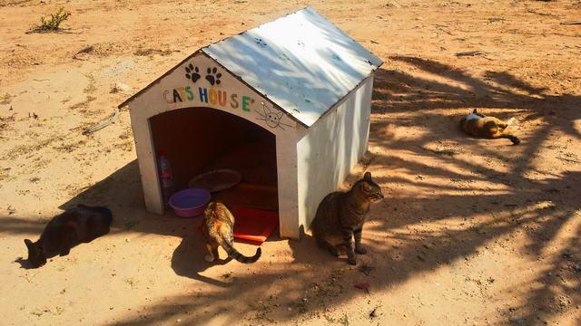El Mouradi Djerba Menzel CatsHouse